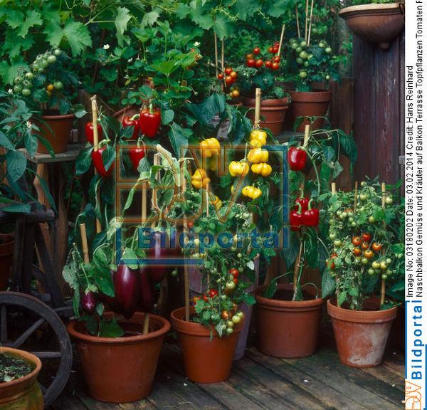 details zu 0003180202 naschbalkon gem se und kr uter auf balkon terrasse topfpflanzen djv. Black Bedroom Furniture Sets. Home Design Ideas