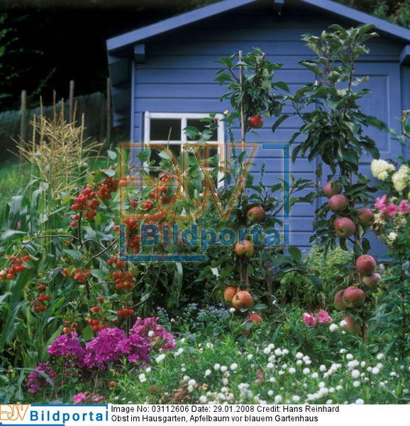 details zu 0003112606 obst im garten apfelb umchen blaues gartenhaus djv bildportal. Black Bedroom Furniture Sets. Home Design Ideas