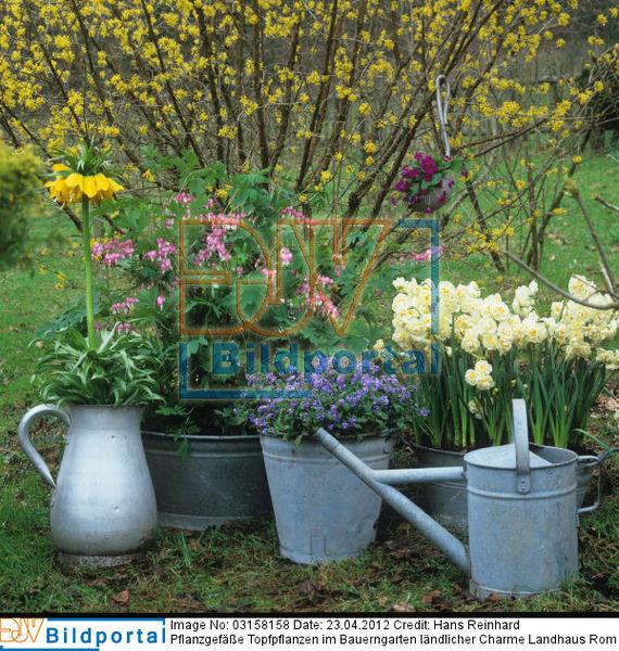 details zu 0003158158 pflanzgef e topfpflanzen im bauerngarten l ndlicher charme landhaus. Black Bedroom Furniture Sets. Home Design Ideas