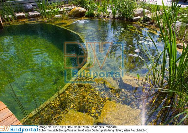 details zu 0003192369 schwimmteich biotop wasser im garten gartengestaltung naturgarten. Black Bedroom Furniture Sets. Home Design Ideas